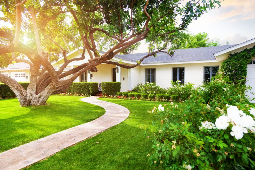 Beautiful white color single family home with big green grass yard, large tree and roses.