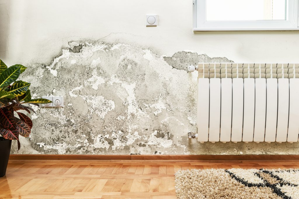 Spot the Difference: Mold, Mildew, or Water Stains